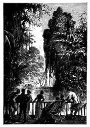 Mitten durch prächtige Wälder. (S. 346)