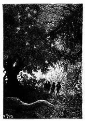 Dick Sand betrat den dichten Wald. (S. 181.)