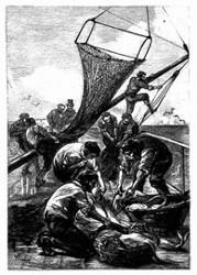 Die Leute Robur's zogen mit großem Vergnügen die Leine ein. (S. 117.)