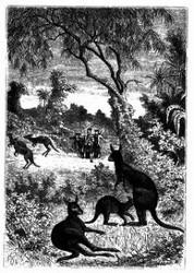 Känguruhs.