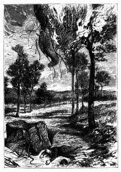 Der Ballon hatte sich an einen Baum, die Spirituslampe setzte ihn in Brand. (S. 164.)