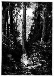 Die Jervis-Bai, wo man prächtige Eukalypten-Wälder fand. (S. 368.)