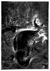 .Der Wal ist arg verwundet und das Wasser färbt sich röthlich... (S. 140.)
