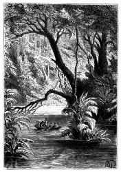 Inmitten dieser riesigen Bäume. (S. 502.)