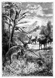 So nähern sich jene einer Heerde Hirsche. (S. 316.)