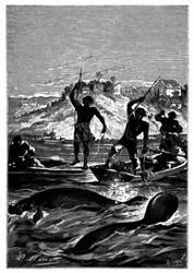 Die Harpunen durchschwirrten die Luft. (S. 145.)