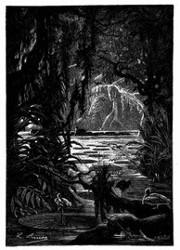 Riesenblätterige Nymphäen. (S. 172.)