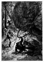 Die dritte Aufstieg endete mit einem furchtbaren Sturze. (S. 23.)