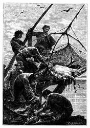 Man erlangte verschiedene ausgezeichnete Fische. (S. 101.)