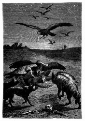 Die wilden Thiere nahmen von den verwüsteten Ländereien Besitz. (S. 229.)