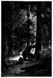 Dieses Geld vergrub er am Fuße eines Baumes in dem Tannenwalde. (S. 230.)
