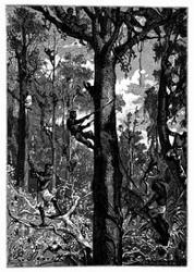 Die Arbeiterschaar kletterte auf die Bäume. (S. 56.)