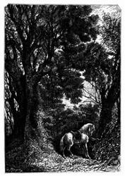 Dort stand, an einen Baum gebunden, ein Pferd. (S. 180.)