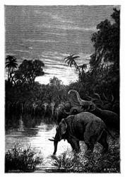 Die Elefanten wollten ihren Durst löschen. (S. 428)
