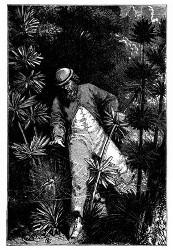 Ein Vöglein im Netz der Spinne. (S. 147.)