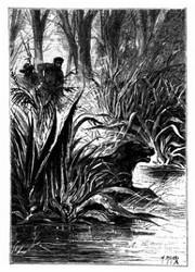 Dingo verschwand zwischen der Doppelwand von Büschen. (S. 247.)