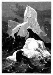 Walroßfang. (S. 396)