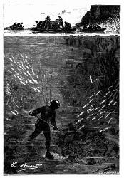Ganze Schwärme von Fischen. (S. 259.)