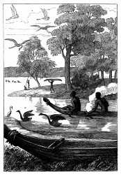 Der Schwanen-Fluß. [Facsimile. Alter Kupferstich.]